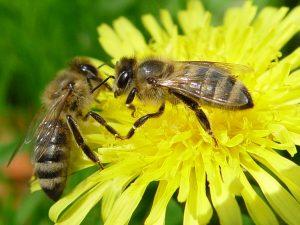 Pchely Пчелы помогают следить за качеством воздуха в аэропорту имени Вацлава Гавела