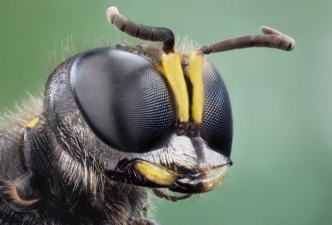 Zuk Glaza Смотреть на мир глазами пьяного жука